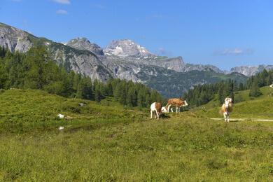 Pferdeschlittenfahrten - Aktivitäten zu Seminaren in Obertauern
