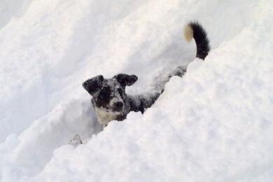 Urlaub mit Hund im 4 Sterne Hotel-Garni Binggl in Obertauern, Salzburger Land